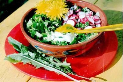 салат из листьев одуванчика